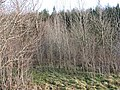 Watch Plantation - geograph.org.uk - 303512.jpg