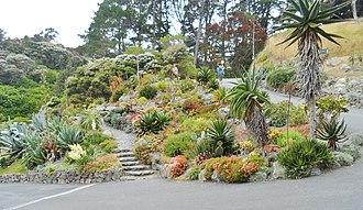 Wellington Botanic Garden - Image: Wellington Botanic Garden Cacti 2015