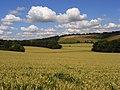 Wheat, Radnage - geograph.org.uk - 892180.jpg