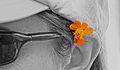 Wild flower (11662064436).jpg