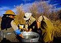 Wild trout project e walker river bridgeport0088 (26183407492).jpg
