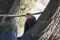 Wilder Mink am Wasser.jpg