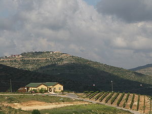 Givat Harel - Home in Givat Harel overlooking vineyard