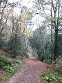 Woodland footpath on Hindhead Common - geograph.org.uk - 1562457.jpg