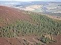 Woodland on Little Conval - geograph.org.uk - 667862.jpg