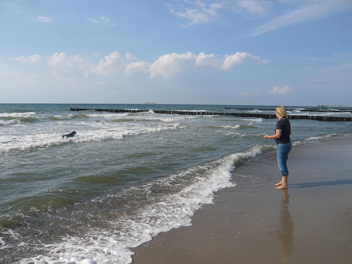 Datei:Wustrow, strand.JPG - Wikipedia