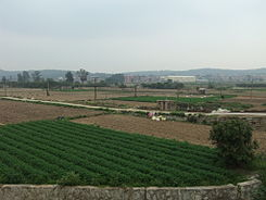 Xiang'an - S201 - fields - DSCF9153.JPG