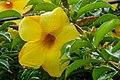 Yellow Flower (46130753692).jpg