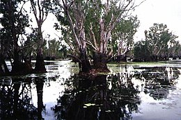Yellow Waters Billabong July 2001.JPG