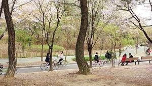 Yeouido Park - Image: Yeouido Park Bicycles, Seoul