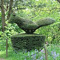 Yew topiary Chirk Castle - geograph.org.uk - 692012.jpg