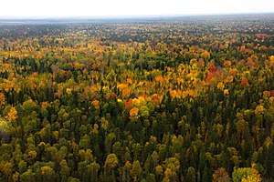 West Siberian taiga - Yugansky Nature Reserve,  in the south-center of the region