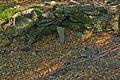 Zákop, sedlo pod Čierťažou, prírodná rezervácia Borsukov vrch, Národný park Poloniny (02).jpg