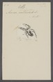 Zilla - Print - Iconographia Zoologica - Special Collections University of Amsterdam - UBAINV0274 068 02 0036.tif