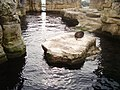 Zoo am Meer 2008 PD 23.JPG