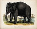 Zoological Society of London; an elephant. Coloured etching. Wellcome V0023127.jpg