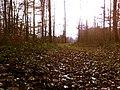 Zum Born 11 - panoramio.jpg