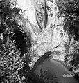 """""""Krčniki"""", slapovi in tolmuni pod Kožbano 1953 (4).jpg"""