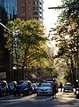 (1)Bathurst Street Sydney.jpg
