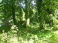 Łódź - Stary cmentarz - panoramio.jpg