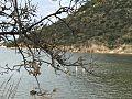 Λιμνοθάλασσα Καλογριάς.jpg