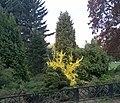 Ботанический сад Москва.jpg