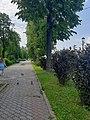 Волжский бульвар,липовая аллея.jpg