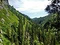 Горный Алтай - panoramio (10).jpg