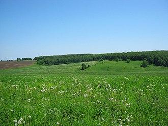 Buturlinsky District - Field near village Tartely, Buturlinsky District