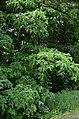 Западная часть парка Нивки. Фото 19.jpg