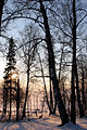 Зима в Подмосковье - panoramio - Vadim Manuylov (2).jpg