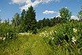 Край леса - panoramio.jpg