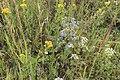 Летнее разнотравье. Чистопольский р-н. РТ. Июль 2013 - panoramio.jpg