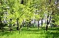 Наводницький парк в Києві. Фото 4.jpg