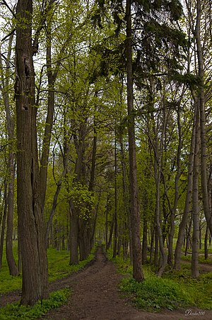 Morshansky District - A park in the selo of Novotomnikovo; a protected area of Russia in Morshansky District