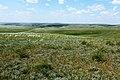 Оренбургская степь в конце мая - panoramio.jpg