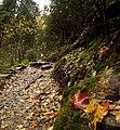 Палитрата на есента.JPG
