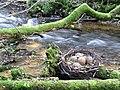 Парк у мельницы, Иерики Melderupīte river, Ieriķi, 2011 - panoramio.jpg