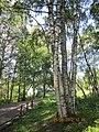 "Природный заповедник - ""KIVACH"" Кивач, Карелия-2012 - panoramio.jpg"
