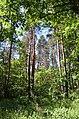 Чернечий Ліс (заказник) біля Ходосівки 01.jpg