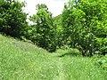 Արզականի և Մեղրաձորի արգելավայր-162.jpg