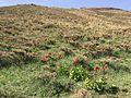 گلستانکوه 1.jpg