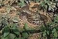 অজগর এর বাসায়.jpg