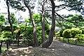 つつじヶ丘公園(らんせん池) - panoramio (19).jpg