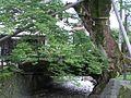 兵庫県丹波市柏原 木の根橋P7215547.jpg