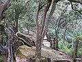 大坑登山步道 Dakeng Hiking Trail - panoramio (2).jpg