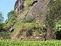大红袍景区的几棵大红袍母树 - panoramio.jpg