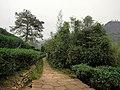 岸上九曲慢游道 - Nine Bends on tha Land Trail - 2015.11 - panoramio (1).jpg