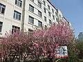 巡道工出品 photo by xundaogong B区的春天 - panoramio.jpg