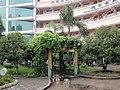 景山小学里漂亮的花坛 - panoramio.jpg